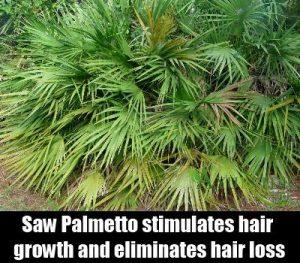 saw palmetto hair growth